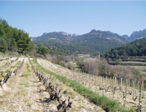 Saint Cosme vineyard
