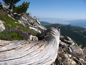Ch-paa-qn Peak