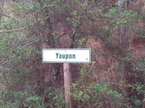 Yaupon