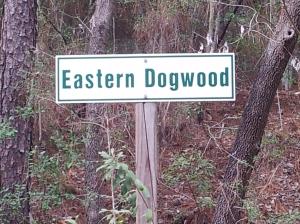 Eastern Dogwood
