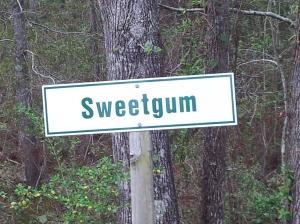 Sweetgum
