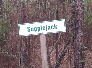 Supplejack