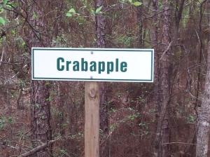 Crabapple
