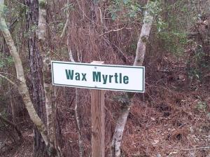 Wax Myrtle
