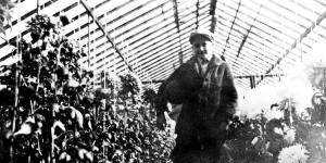 Theodore Roethke in a Greenhouse